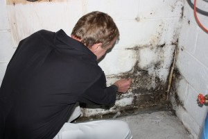 westchester county mold testing