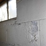 basement mildew mold