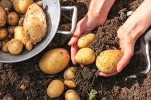 soil toxins