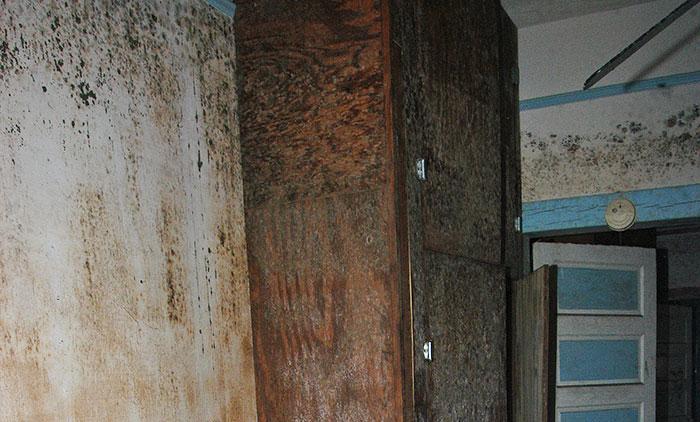 Black Mold On Walls Rtk Environmental Group
