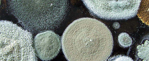 Many Kinds Of Mold