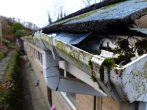 Clogged Gutters Can Cause Water Leaks And Mold Growth