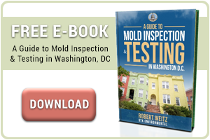 Mold Allergy Symptoms Rtk Environmental Group