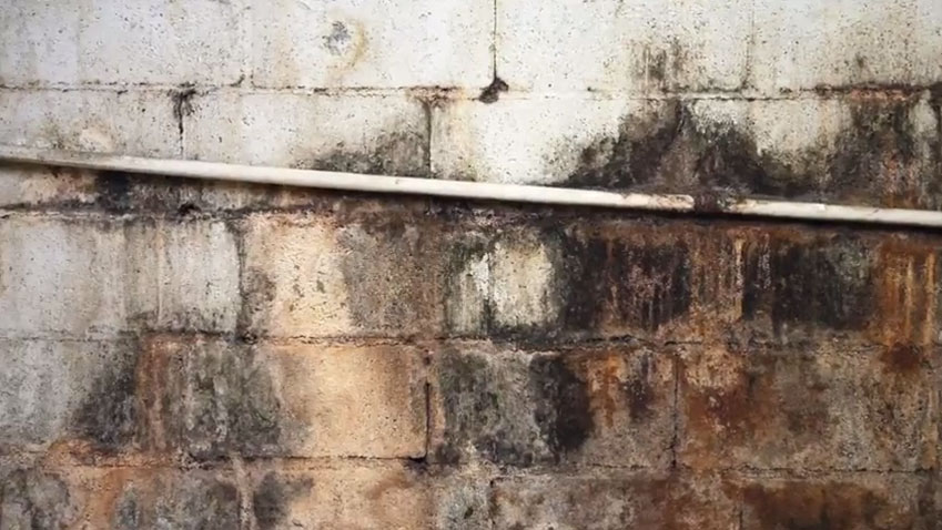 What is black mold? - RTK Environmental Group
