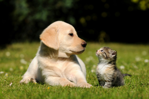 How contaminated soil affects pets