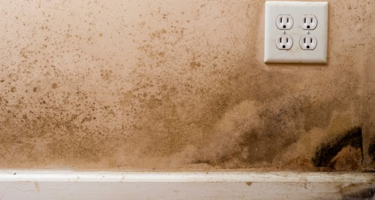 Is All Black Mold Toxic?