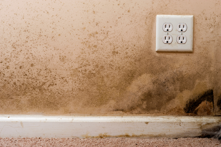 Is All Black Mold Toxic Rtk Environmental Group