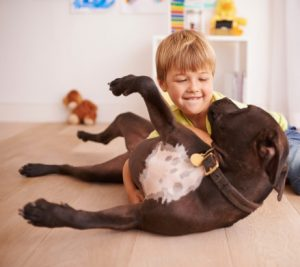 lead poisoning pets