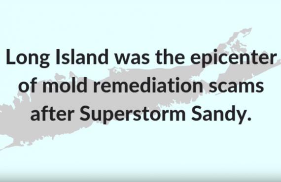 long island mold