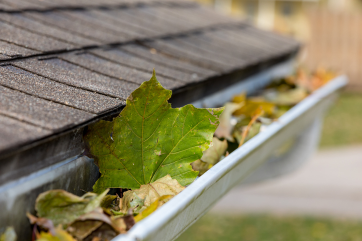 Fall gutter cleanup