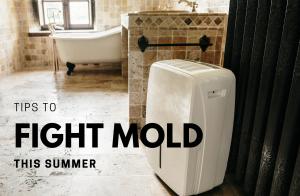 prevent summer mold